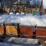 Vizita in stupina! 16 Feb 2012
