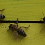 Discutii intre apicultori si reprezentanti ai guvernului