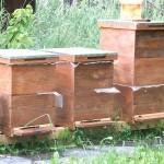 Vand familii de albine si roi.