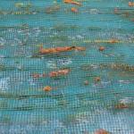 Colectarea propolisului prin utilizarea plasei pentru insecte? Nu!