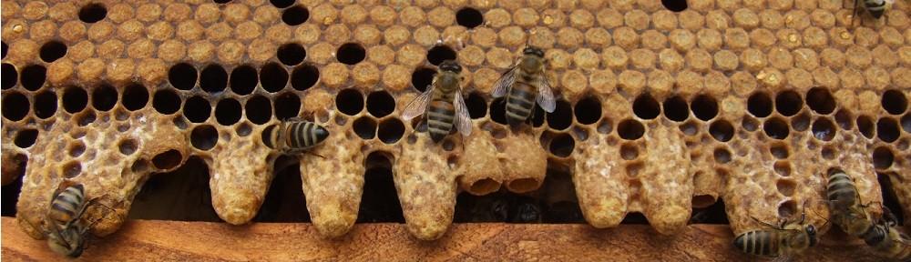 Mybees.ro | Blog Apicol