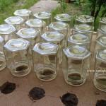 Fagure cu miere crescut direct in borcan de sticla.